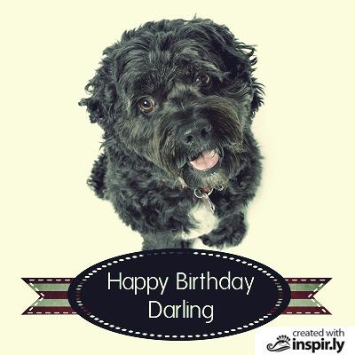 Birthday Happy birthday darling dog