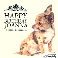 Happy Birthday Baby Chihuahua
